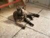Darujeme kočičku - foto 1