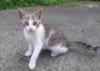 Daruji pěkně vybarvenou kočičku je hravá