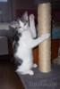 Dvě koťátka