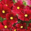 Krásenka Gazebo red -