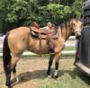Krásný Quarter kůň Buckskin valach připraven pro n