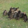 NO s PP štěně - foto 1