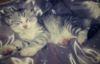Prodám whiskas koťata
