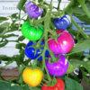 Rajče duhová směs - semena 50 ks - foto 1