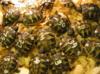 Suchozemská želva - krásný dárek pro děti