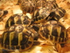 Suchozemská želva - super dárek nejen pro děti