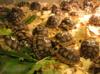 Suchozemská želva - super vánoční dárek !!