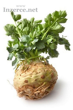 Celer bulvový Maxim - semena
