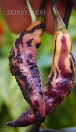 Chilli paprika Pink Tiger - semena 30 ks
