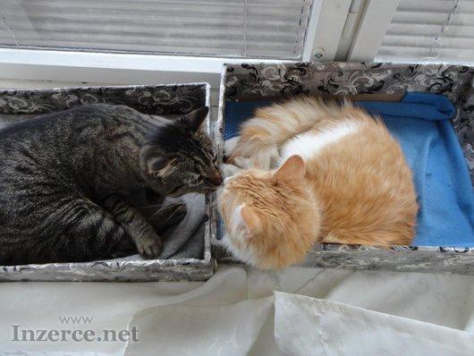 Daruji dvě mazlivé kočičky
