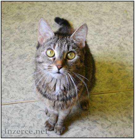 Kočka domácí - Daruji kočku