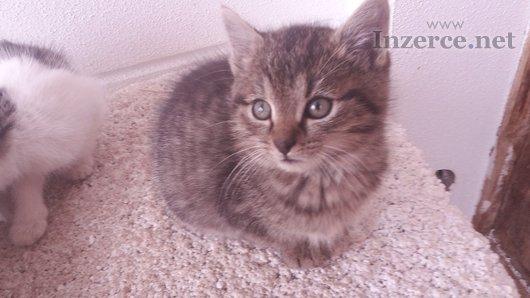 Daruji nádherná koťátka