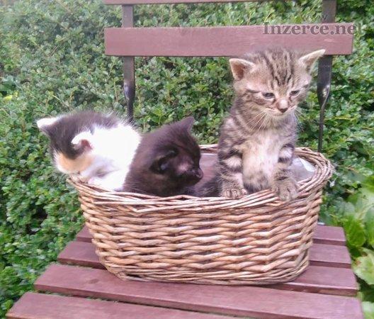 Daruju koťátka pro radost