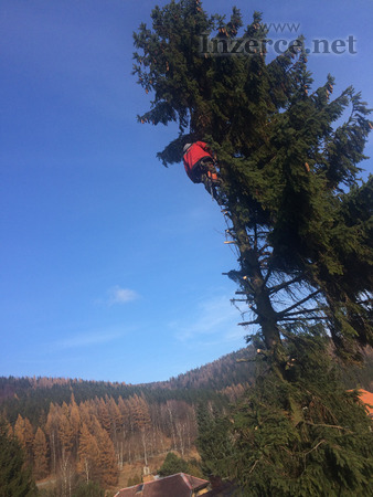 Kácení stromů Znojmo , Rizikové kácení