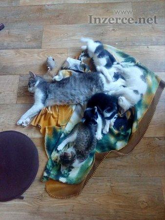 Koťátka k odběru