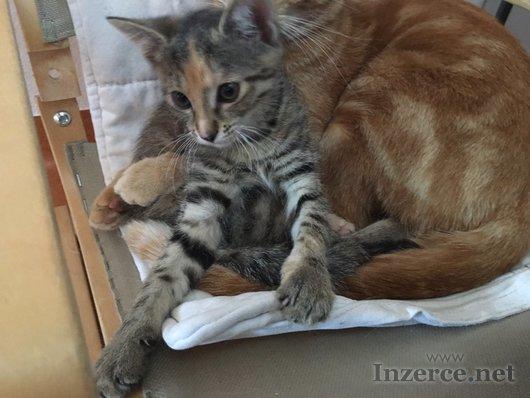 Krásně mourovaná kočička zdarma