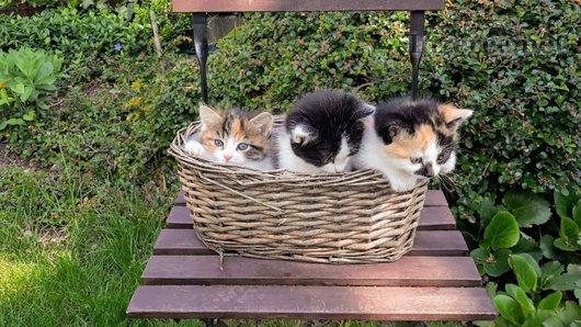 Malé koťátko pro váš domov!