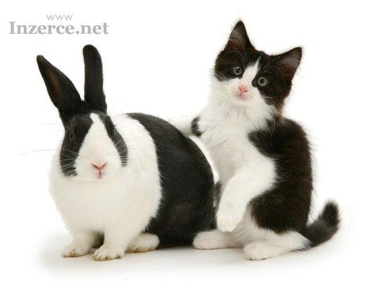 Mazlivá koťátka darujeme!