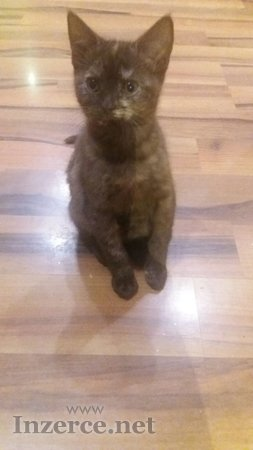 Nádherná koťata - děvčataA