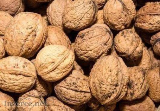Ořechy vlašské letošní.
