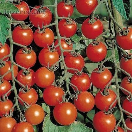 Rajče Chadwick cherry - semena