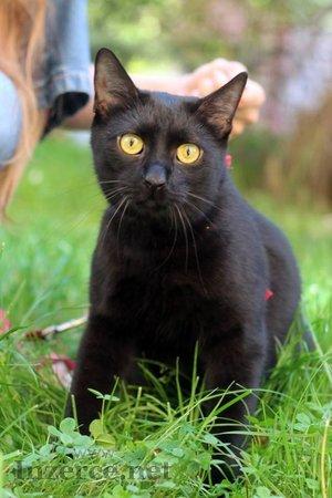 Raul Nero, kočičí éro - hledá domov