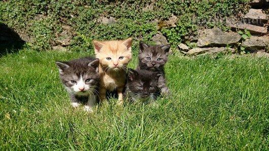 Rezavé a šedivé koťátko