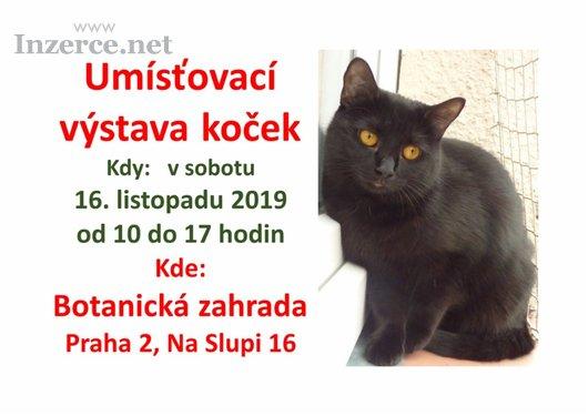 Umísťovací výstava koček v Praze 2