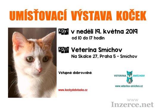 Umísťovací výstava koček v Praze 5