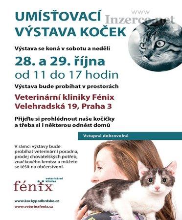 Umísťovací výstava koček ve Fénixu