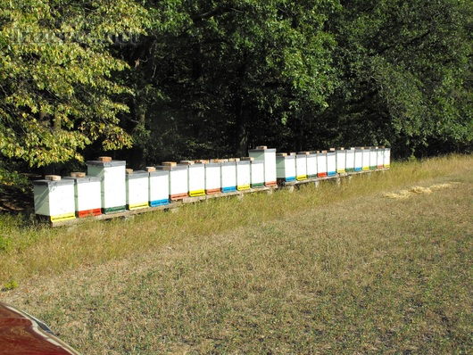 Včely,oddělky 2019