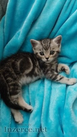 Whiskas koťátka