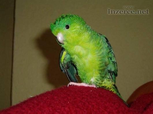 Ztratil se papoušek