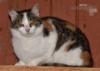 Darujeme nalezenou kočičku - foto 2