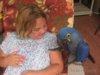 Nabídka Puvabný Hyacint papoušek papoušci  - foto 2