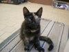 Darujeme kočičku - foto 3