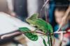 Entomologický výměnný den a výstava v Otrokovicích - foto 3
