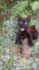 Koťata do dobrých rukou - foto 3