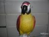 Nádherný velký barevný papoušek-asi 87 cm - foto 3