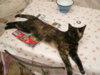 Darujeme kočičku - foto 4