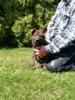 Německý ovčák-štěňátka s p.p. - foto 4