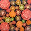 Rajče duhová směs - semena 50 ks - foto 4