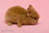 Teddíci od Světlušky - foto 4