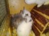 Zakrslý králíčci - foto 4