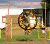Belgický ovčák dlouhosrstý - Tervueren - foto 5