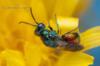 Entomologický výměnný den a výstava - foto 5
